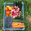 panier-fruits-legumes-hcs